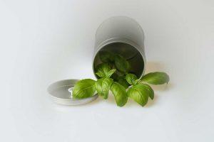 Coltivare Basilico in un vaso