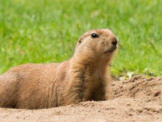 giorno della marmotta