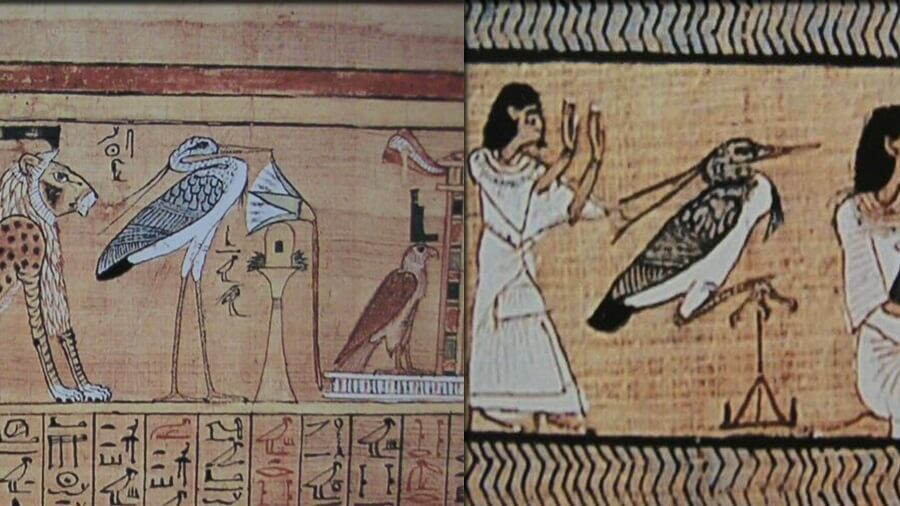 Antico-Egitto-Airone-Cenerino